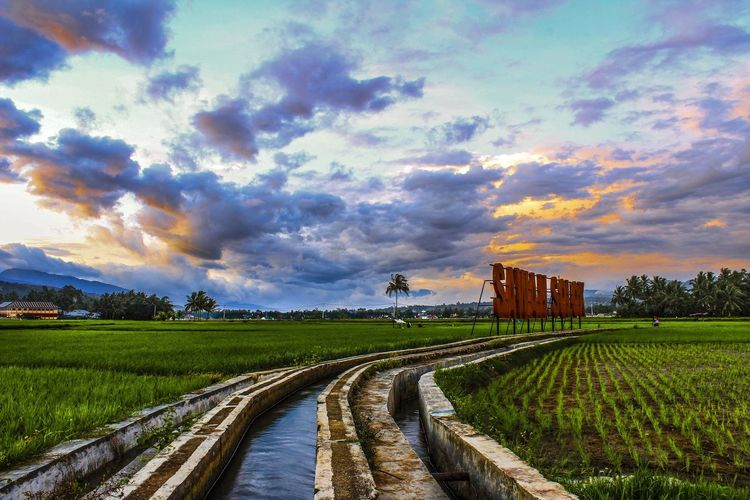 before sunset Landscape_Collection Landscape_photography Landscapes Sunstet Canon Canonphotography Canon_photos Canon700D EOS700D EOS Sumbar_rancak Minangkabau Rancak Rural Scene Rice Paddy Sunset Agriculture Cereal Plant Field Sky Landscape Cloud - Sky Rice - Cereal Plant Asian Style Conical Hat