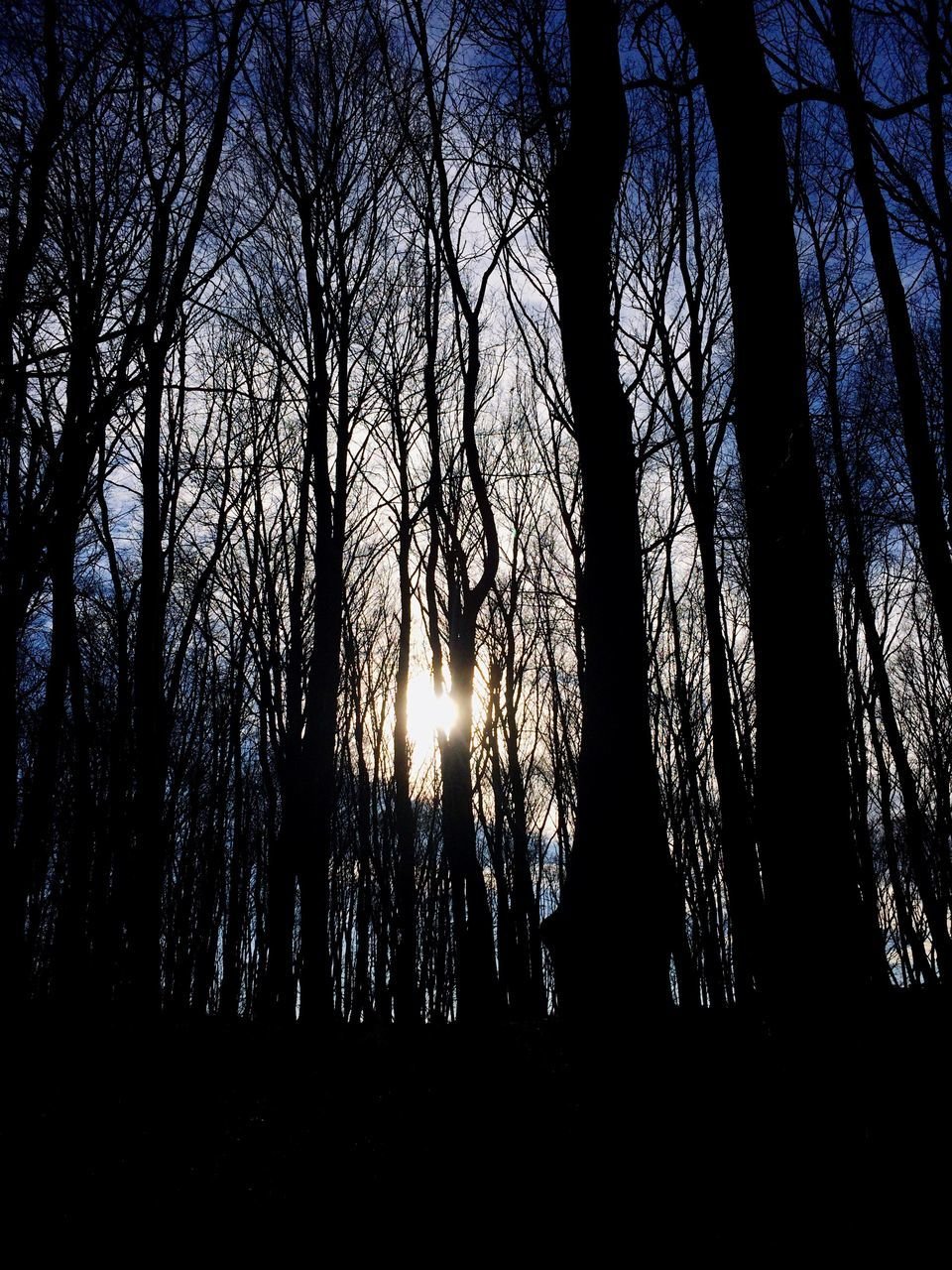 Silhouette Trees On Field In Forest