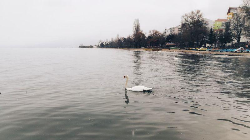 Somewhere EyeEmNewHere Sea Bird Swimming Animal Wild Animal Mute Swan Freshwater Bird