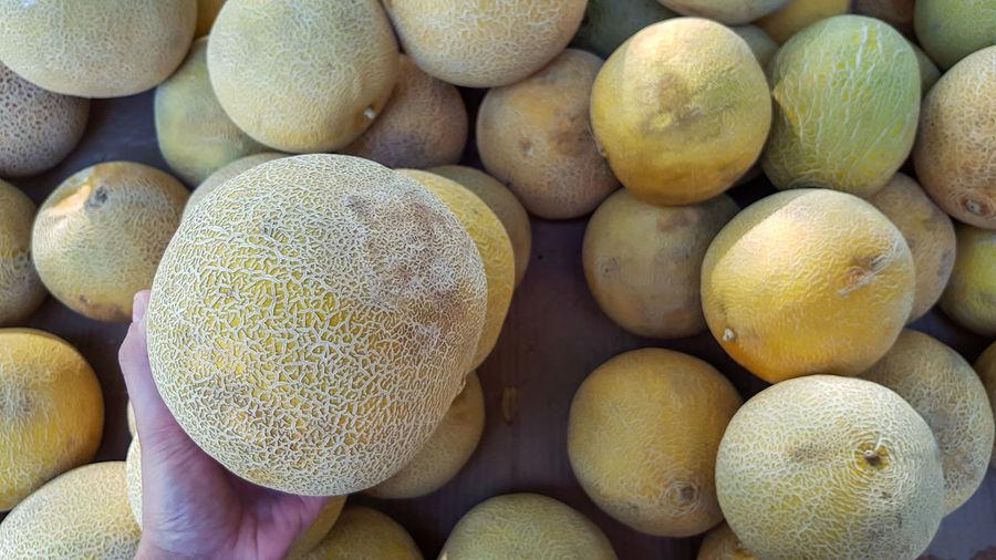 Hand picking a melon