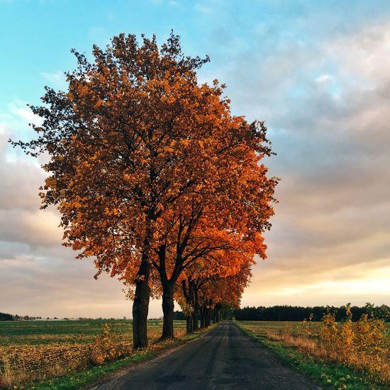 Autumn Fall Trees Tree Road Colors Autumn Colors Sunset Colors Of Autumn Leaves Autumn Leaves IPS2015Fall