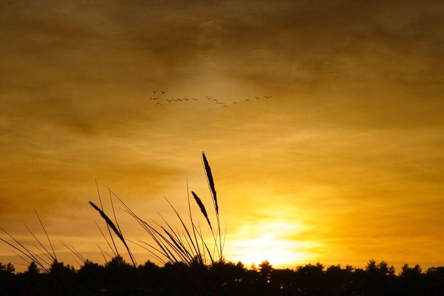 Golden Sunset at Holkham Sunset Nature Silhouette Sky Beauty In Nature Orange Color Scenics Cloud - Sky Landscape Holkham Norfolk