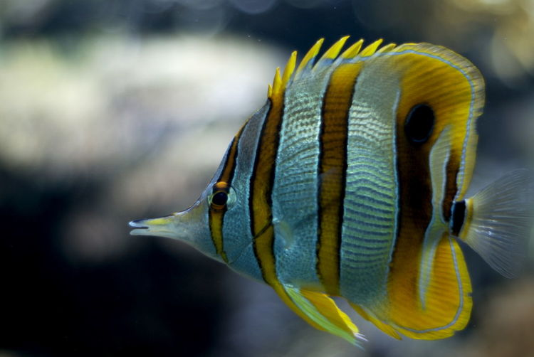 Exotic fish swimming in the water
