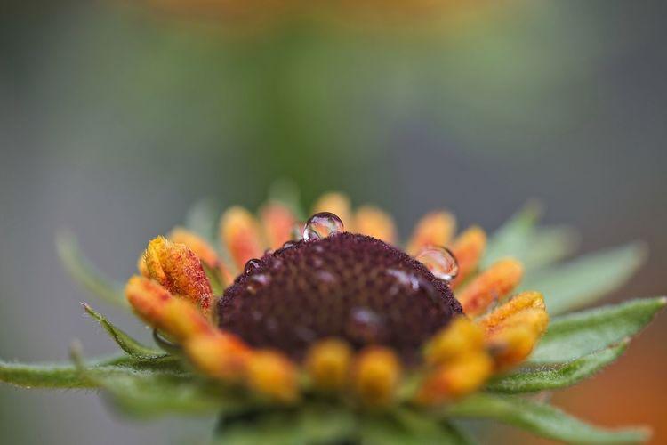 Close-up of orange growing on plant
