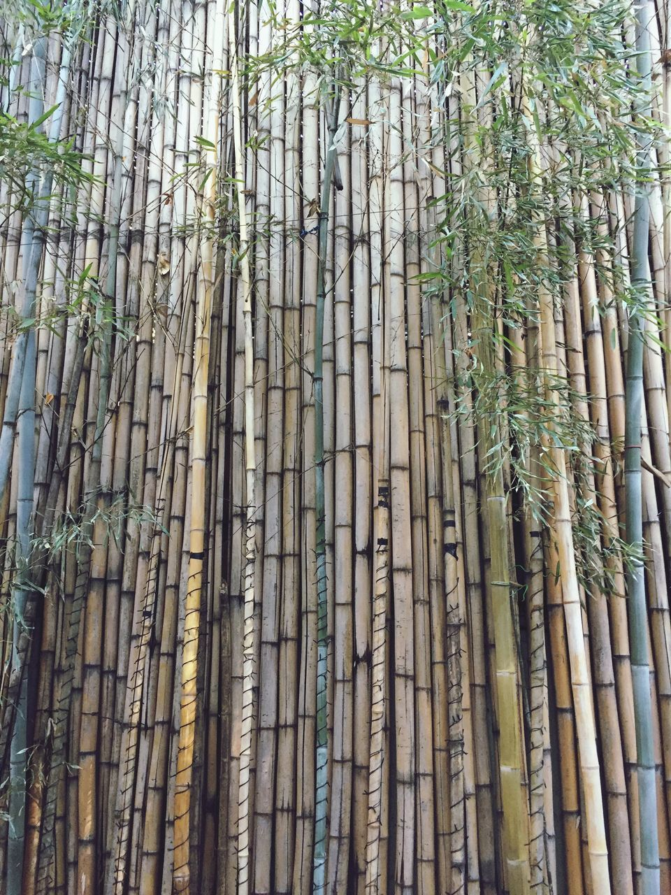 LOW ANGLE VIEW OF BAMBOO PLANTS