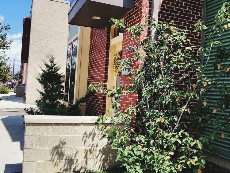 Plant Life Frontporch Tree Brick Wall City Life Condominium Pittsburgh Fresh 3