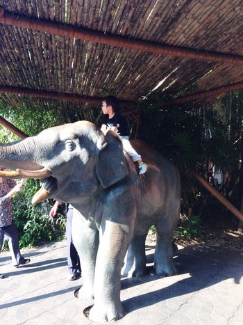 Service Animals Elephant 象