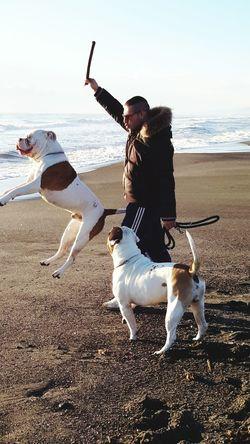 Bulldog Americano Bulls Super Dog American Bulldog Mega Bulls Al Mare Jamp! Bulldog Che Salti