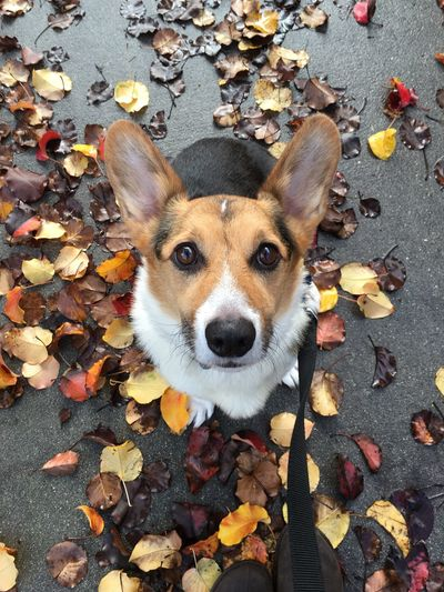 Frodo my pup trying to blend in 😊 Leaf EyeEm Best Shots EyeEm Nature Lover EyeEmBestPics EyeEm Animal Lover Dogs Of EyeEm