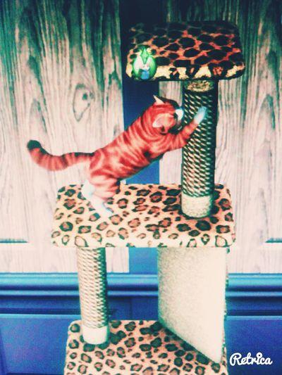 Cat♡ sims3