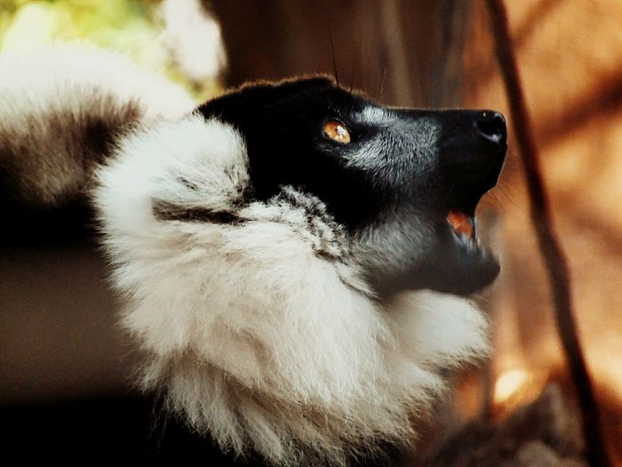 Close-up of a dog looking away at home