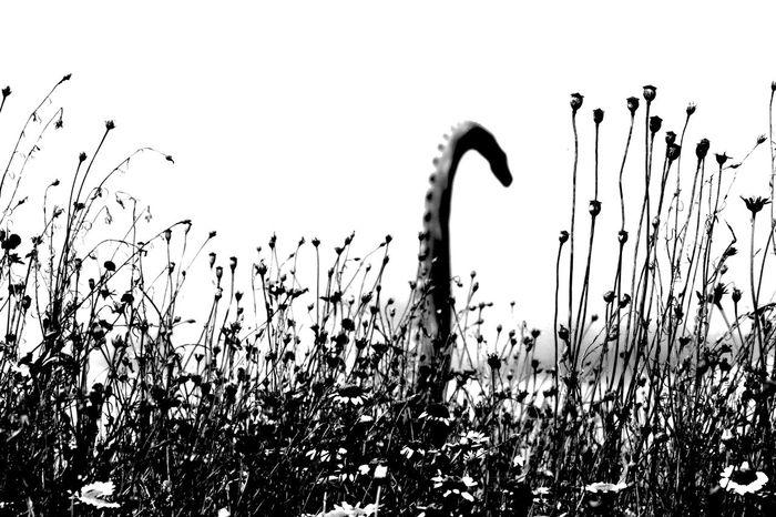 Brontosaurus Dino Dinosaur Dinosaurier  Dinosaurierspuren Dinosaurs Dinosaurs Park DinosaursAroundTheWorld Long Neck