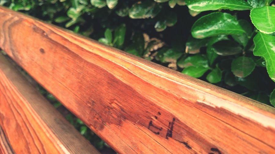 A wooden bench under the rain First Eyeem Photo