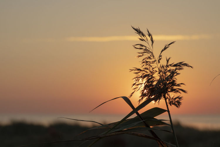 Close-up of silhouette plant on field against orange sky