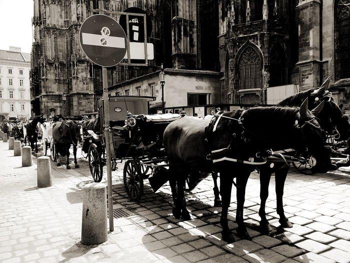 Fu Asturias Vienna Europe Black And White