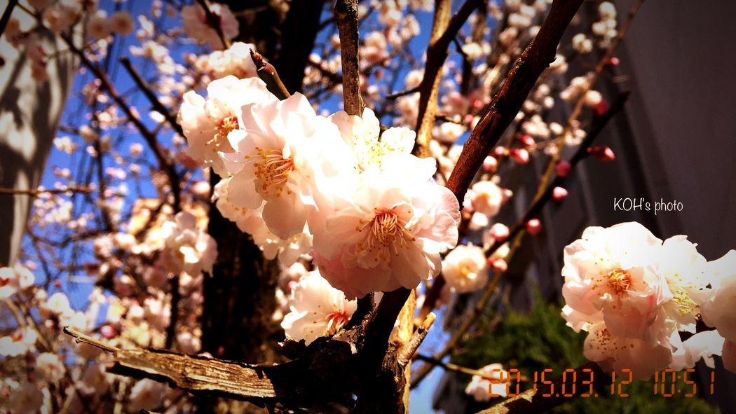 …撮れたよ Flowers Flower
