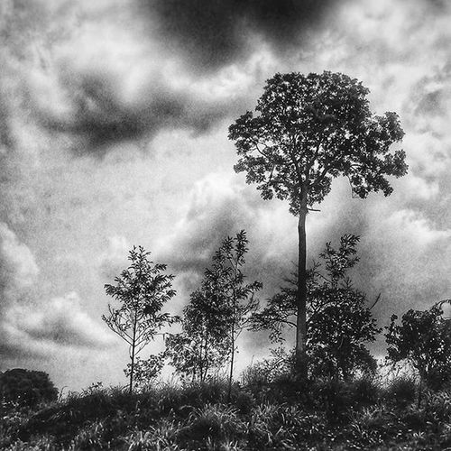🌿 . . ____ Blackandwhite Trees Sky Cloud Quiet Chill Calm Earth Storm Majestic Forest Travel