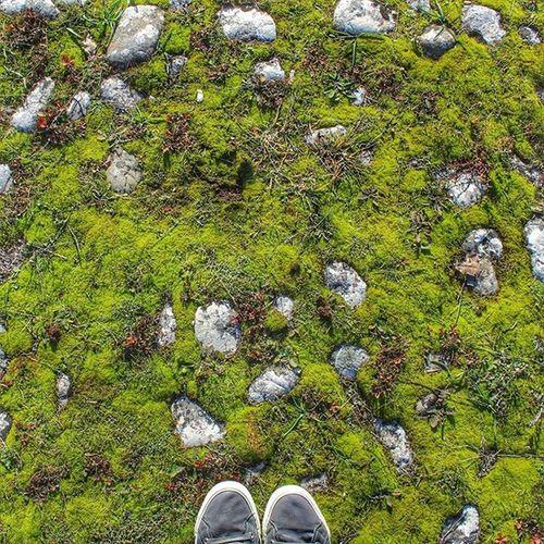 natural floor Igers_salerno Igerscampania Igeritalia Dafareasalerno Dafareincampania Insolitaitalia Campaniafelix Nature Naturelover Instanature Green Nature_perfection Naturetime Naturalfloor Stone Igersgallery Igersoftheday Fromwhereistand