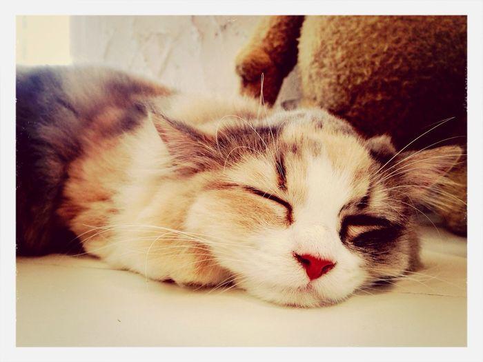 Sleep Cat♡ Bangkok Thailand. Cat Cafe