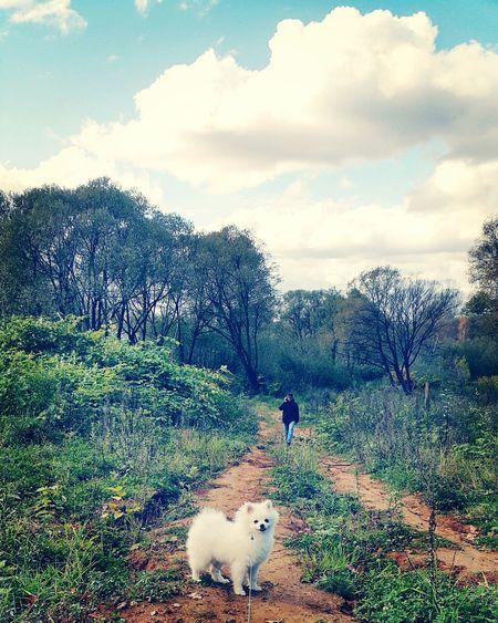 Dog in farm against sky