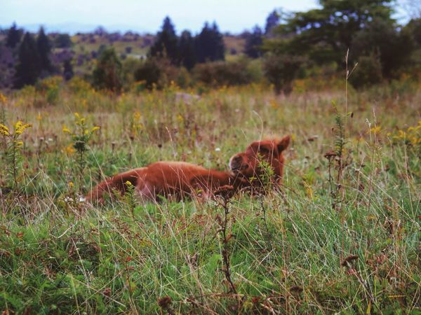 Grayson Highlands National Park Animal Themes Landscape Nature Tranquil Scene