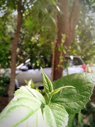Leaf Nature Close-up Tree Growth No People Green Color Day Plant Outdoors Fragility Freshness Beauty In Nature Greenhouse