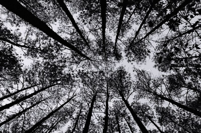 Atlanta Forest Tree Nature Branch Low Angle View Beauty In Nature Growth Tranquility No People Outdoors Day Scenics Forest Tree Trunk Sky Flower Freshness USAtrip USA Perspectives On Nature Be. Ready. Be. Ready. Black And White Friday Black And White Friday The Great Outdoors - 2018 EyeEm Awards The Great Outdoors - 2019 EyeEm Awards