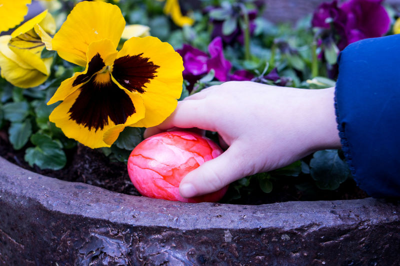 Beauty In Nature Close-up Colour Day Easter Easter Eggs Egg Finding Flower Flower Head Fragility Freshness Grabbing Hand Human Body Part Human Hand One Person Outdoors Petal Real People Searching Yellow