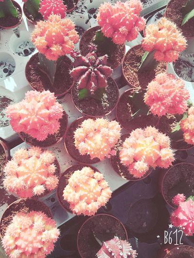 🌹 🌵f🙊 Yuu N The Shawtys Yuu Came Wit 🌵🌵 Brr 🌵 Cactus 🌵🌷🌵Sexta🌵🌷🌵 Naturelovers