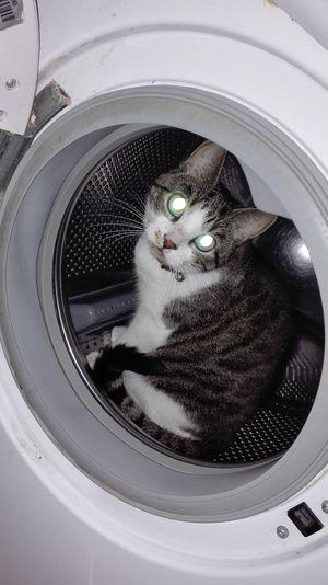 Portrait of cat sitting in washing machine