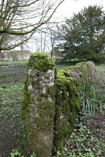Close-up Countryside Day England Grass Green Color Growth Moss Moss Covered Moss Covered Wall Mouldy Nature No People Outdoors Plant Sky Tree Wall