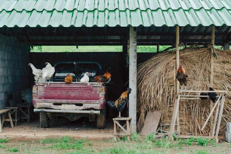 View of birds in barn
