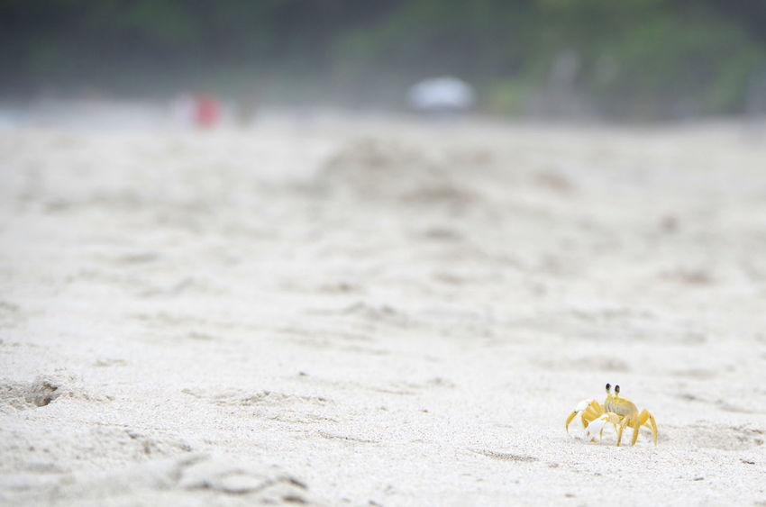 Beach Beach Photography Bealtfull Church Crab Crab On The Beach Small Crab