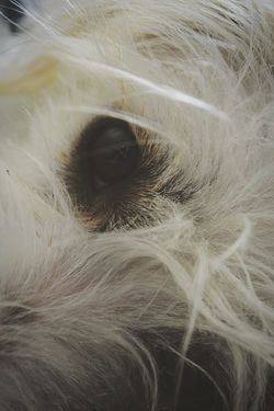 Eye Animal Body Part Eyesight Portrait Looking At Camera Close-up Beauty Lying Down Cute Animal Hair