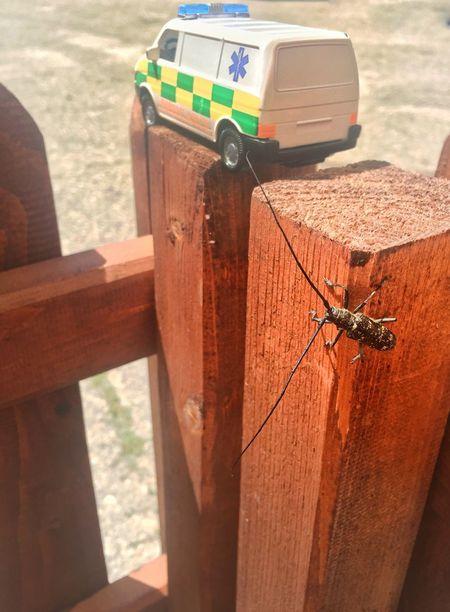 #Beetle #bug #ambulance #toy #littlesize #miniature #sun #light #nature #insectlife #micro #macro #rightmoment #takethemoment