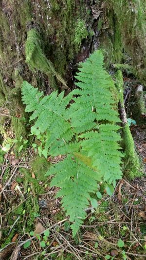 Fern growing in