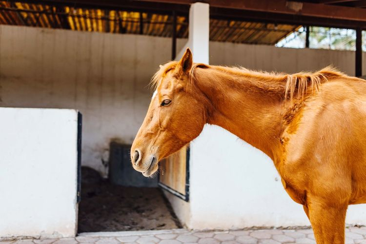 Horse EyeEm Selects Mammal Animal Animal Themes Vertebrate Domestic Animals One Animal Stable
