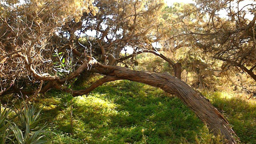 sardegna Natura Alberi Senzafiltro Natural Light Ginepro