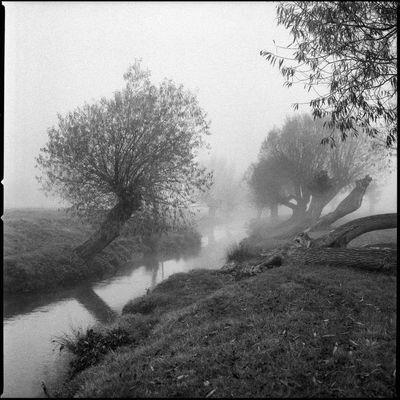 Blackandwhite Calm Fog Landscape Misty River Romantic Tranquility Trees