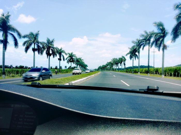 Palm Tree Travel Tropical Climate Travel Destinations Road Outdoors