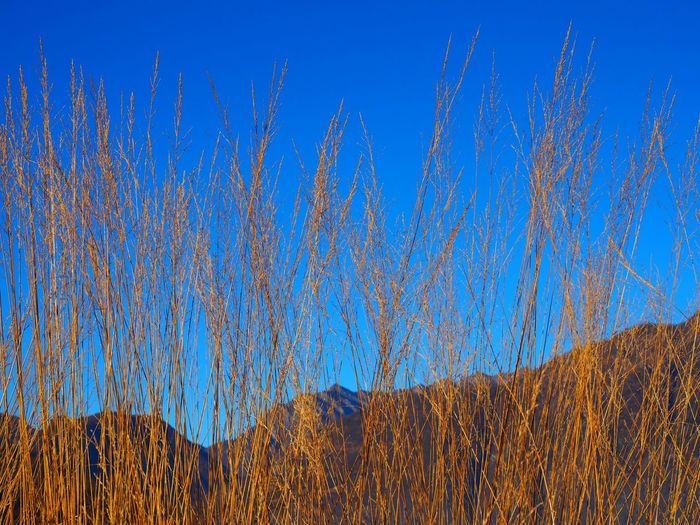 Beauty In Nature Blue Clear Sky Close-up Day Grass Growth Mountain Nature No People Outdoors Ridge Sky Sunlight Tranquility