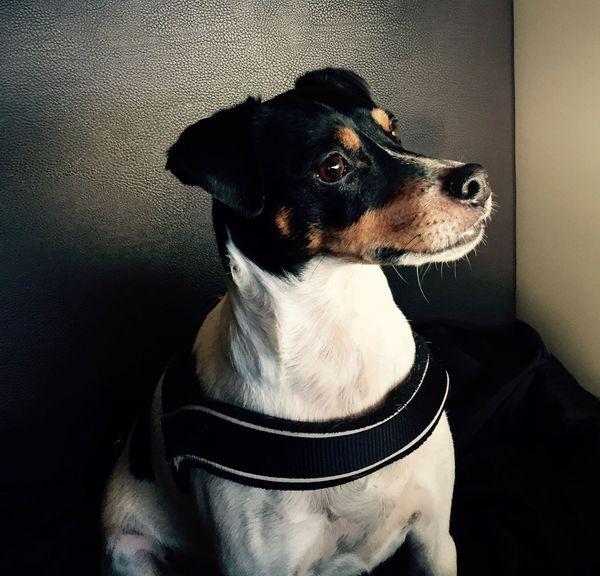 IPhoneography Dogs Of EyeEm Dog Pets Mammal One Animal Animal Themes Domestic Animals Sitting