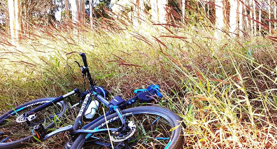Bicicleta pedal Bicycle Nature No People Outdoors Bici Velo First Eyeem Photo Day Mode Of Transport Transportation Land Vehicle Stationary Growth Blue Grass