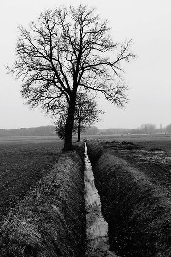 Bare Tree Tree Tranquility Nature Tranquil Scene Scenics Beauty In Nature Landscape Single Tree Tree Trees TreePorn Tree_collection  Trees And Sky Blackandwhite Black And White Black & White Blackandwhite Photography Black And White Photography Black&white Blackandwhitephotography Black And White Collection  Nature Nature_collection Helmond