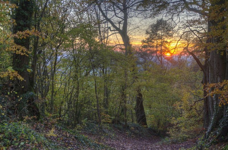 Autumn Leaves Beauty In Nature Combe Hay Forest Growth Landscape Mist No People Sun Set Tranquility Tree Wood