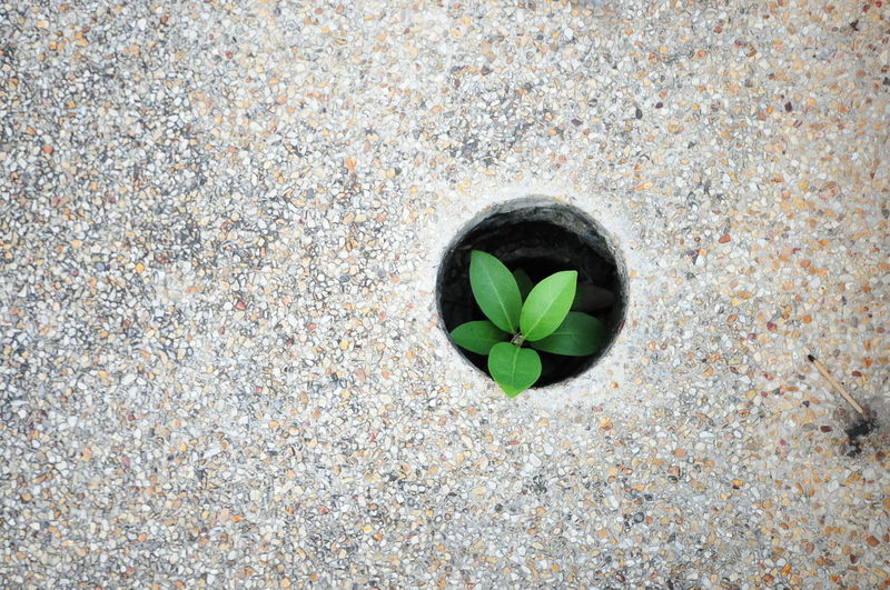High angle view of plant growing in hole