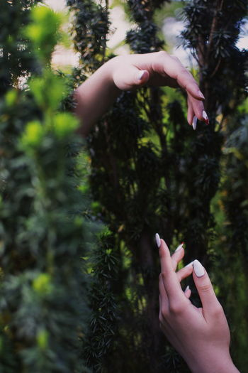 Cropped hands of woman by plants