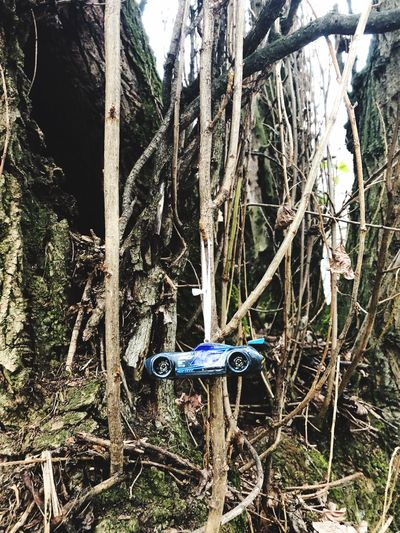 Toy Car Tree Tree Trunk No People Branch Day Outdoors Bare Tree