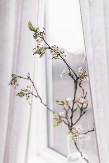 Close-up of white flowering plant against window