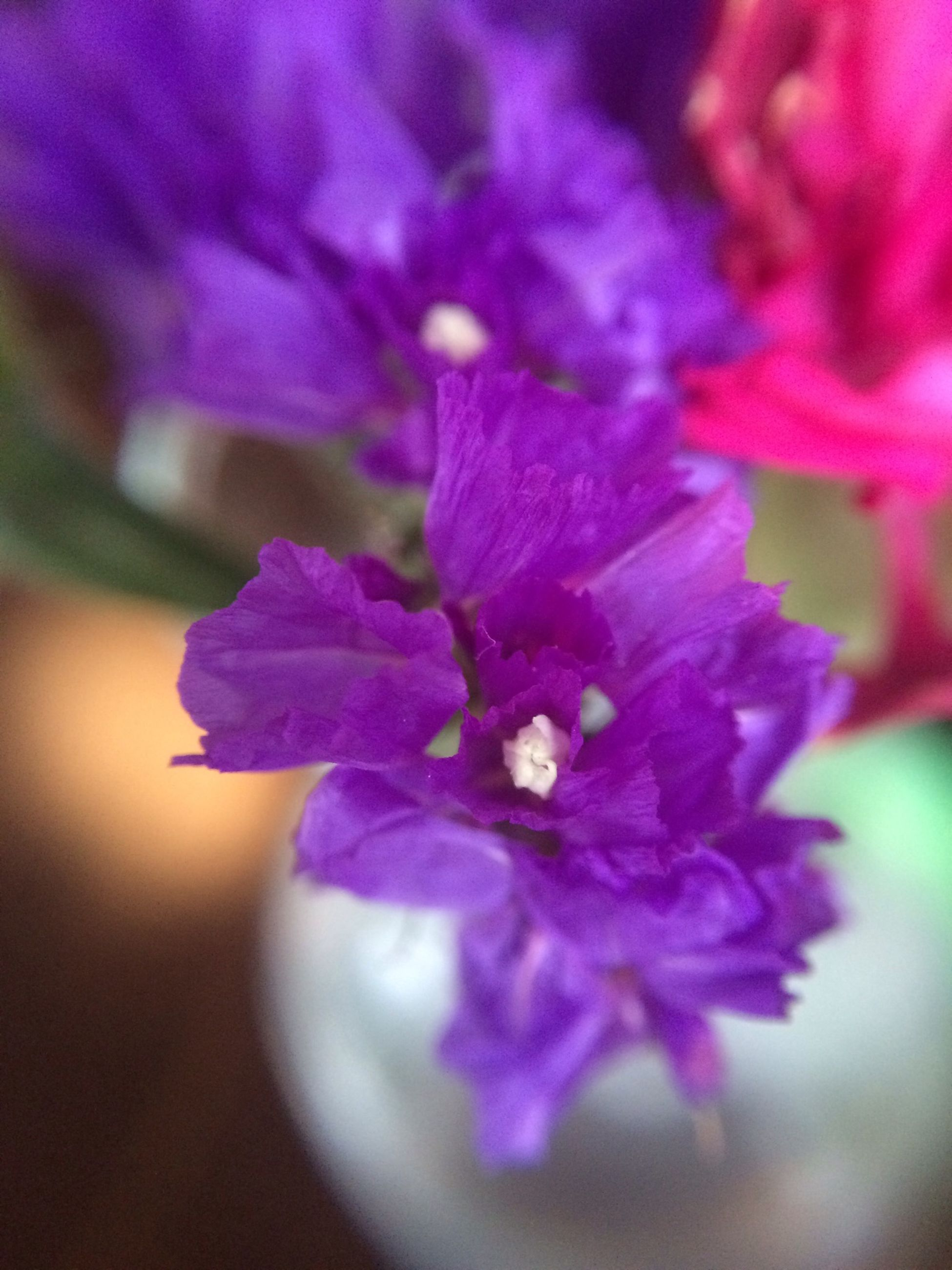 flower, petal, freshness, flower head, fragility, close-up, growth, beauty in nature, purple, nature, selective focus, pink color, blooming, in bloom, focus on foreground, plant, stamen, pollen, blossom, single flower
